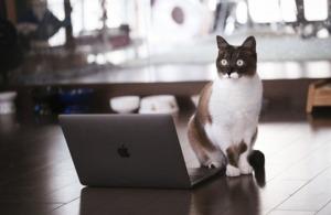 罠を発見した猫